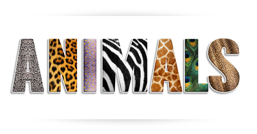Legged Animals With  Letters